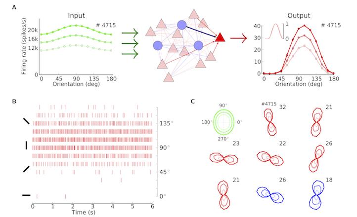 Bernstein Center Freiburg   Research: Network Models