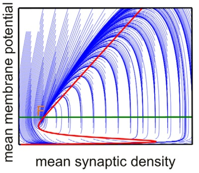 New article in PLoS Computational Biology: Self-Organized Criticality in Developing Neuronal Networks