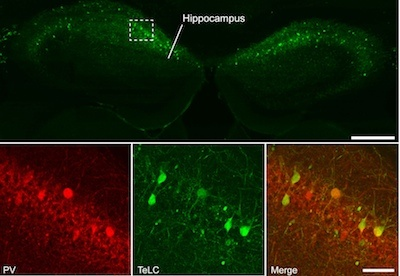 Nature Neuroscience publishes article by BCF member