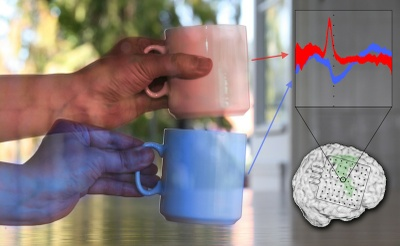 Getting a grip on grasping: Scientists from Freiburg decipher brain commands for different grasp types