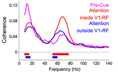 Stimuli are selected through selective synchronization: An article in the journal NEURON demonstrates how selective synchronization between brain areas can modulate the effective connectivity between them.