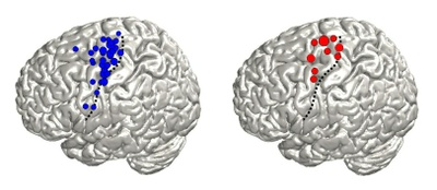 Mapping the Brain: Freiburg Researchers Use Signals from Natural Movements to Identify Brain Regions
