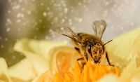 Undiscovered compounds, bee navigation